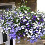 fleurs pour suspension extérieure