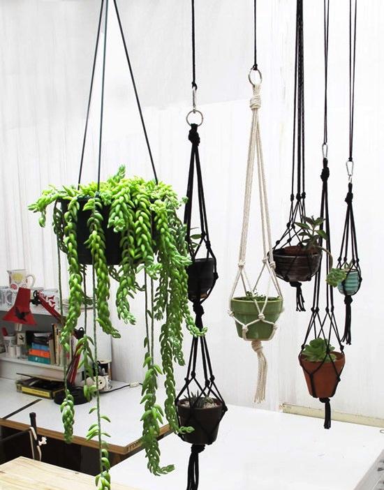 suspension plante interieur
