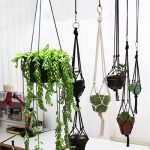 suspension plantes intérieur